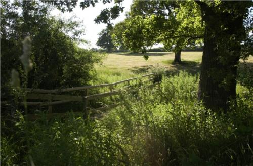 Photograph of a field in Batchelors Farm