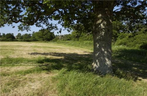 Photograph of a field and tree in Batchelors Farm