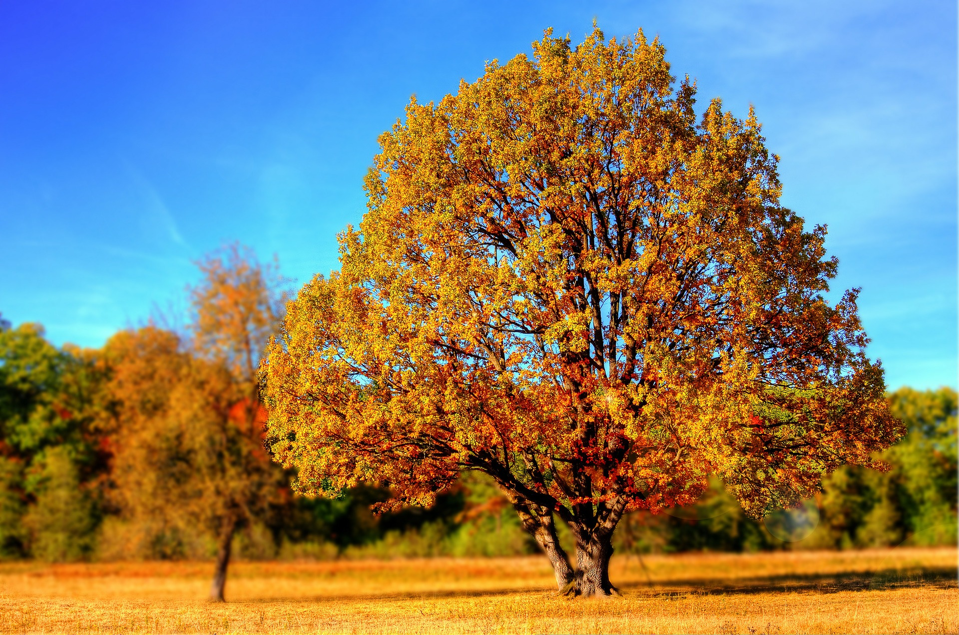 Decorative photo of an Oak Tree